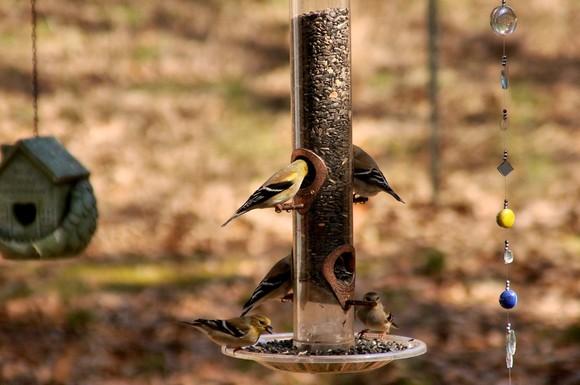birds 017cs sm