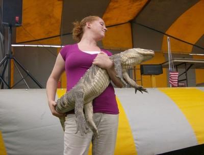 aliigator